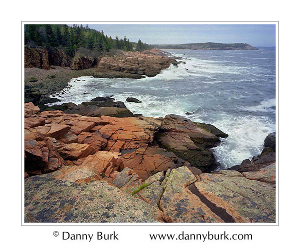 Picture: Cove and lichen-covered rocks along Loop Road, Acadia National Park, Maine