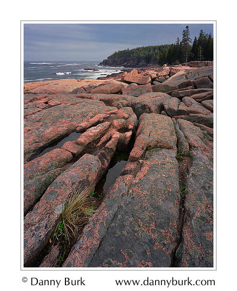 Picture: Lichen-covered rocks near Monument Cove, Acadia National Park, Maine
