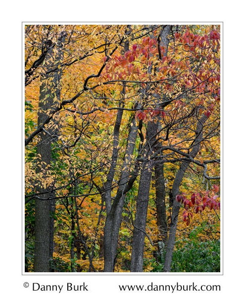 Picture: Autumn color, South Bend, Indiana
