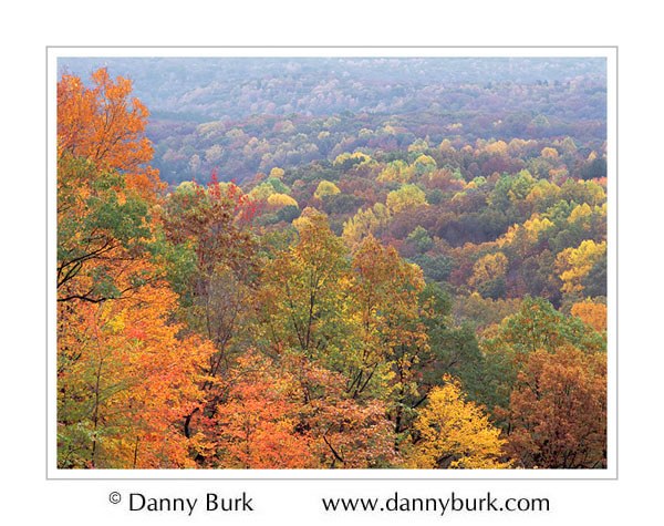 Picture: Colorful trees, Brown County State Park, Indiana