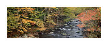 Picture: Fall color, Little River, Elkmont, Great Smoky Mountains National Park