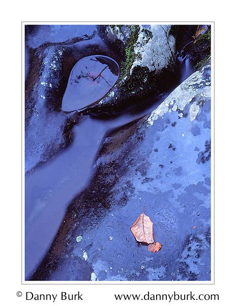 Picture: Water, leaves, rock in Little Pigeon River, Greenbriar, Great Smoky Mountains National Park