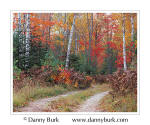 Picture: Fall color, road to Halfmoon Lake, Hiawatha National Forest, Upper Peninsula, Michigan