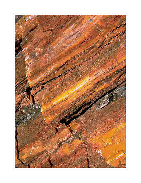 Picture: Petrified Wood, Petrified Forest National Park, Arizona