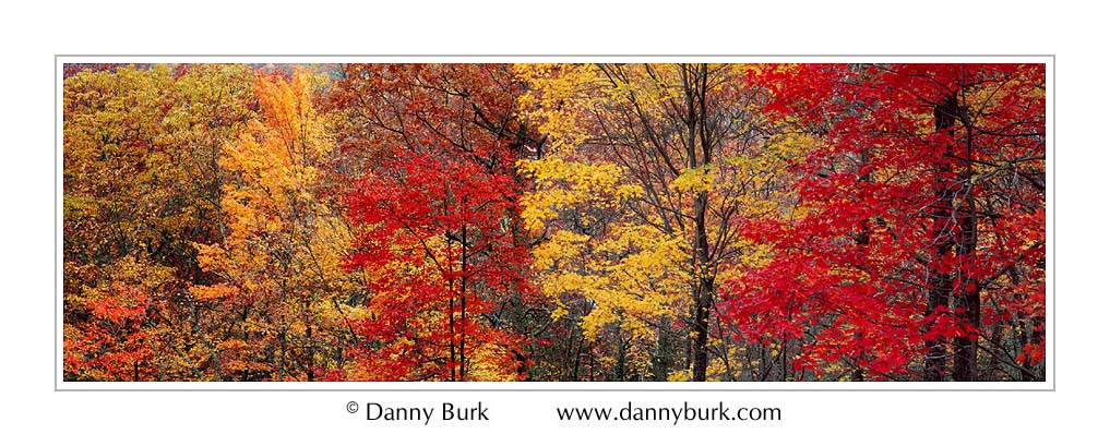 Picture: Colorful trees, Roaring Fork, Great Smoky Mountains National Park, Tennessee