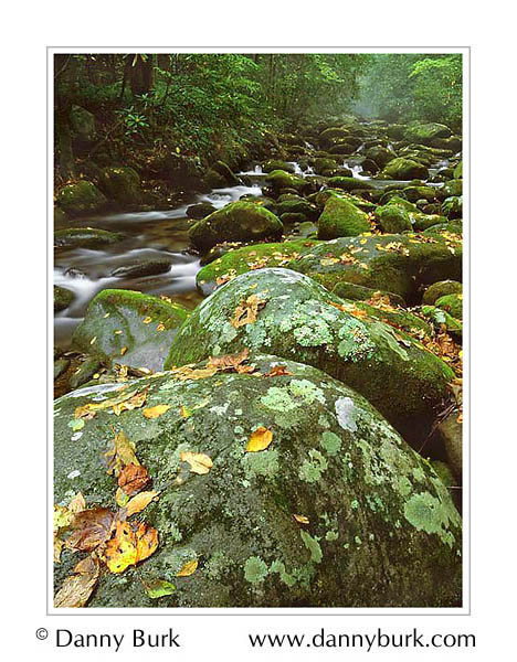 Picture: Lichen-covered rocks, Roaring Fork, Great Smoky Mountains National Park