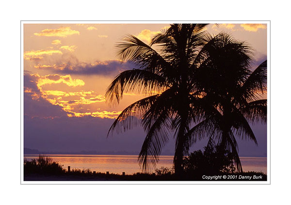 Picture: Coconut palms at sunrise, Sanibel Island Causeway, Florida