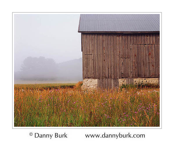 Picture: Barn and thistle field in fog, Sleeping Bear Dunes National Lakeshore, Michigan