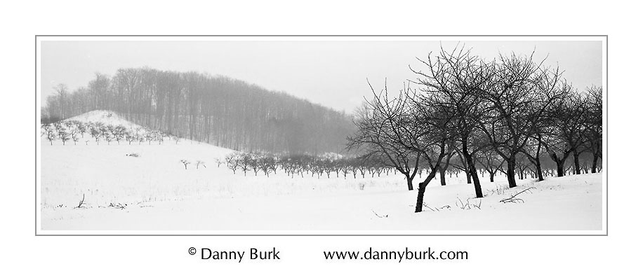 Picture: Cherry orchard in snow, Sleeping Bear Dunes National Lakeshore, Michigan
