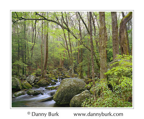 Picture: Cosby Creek, Great Smoky Mountains National Park, Tennessee