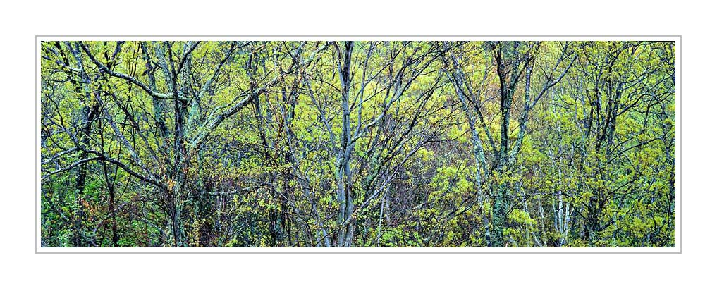 Picture: Spring foliage along US 441, Great Smoky Mountains National Park, Tennessee - Panorama