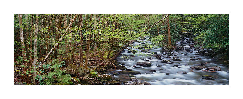 Picture: Fresh spring greenery along Porter Creek, Greenbriar, Great Smoky Mountains National Park, Tennessee - Panorama