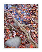Picture: Leaf-filled pool, Great Smoky Mountains National Park