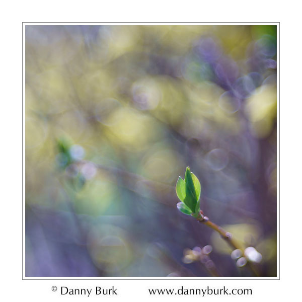 Spring bud, South Bend, Indiana