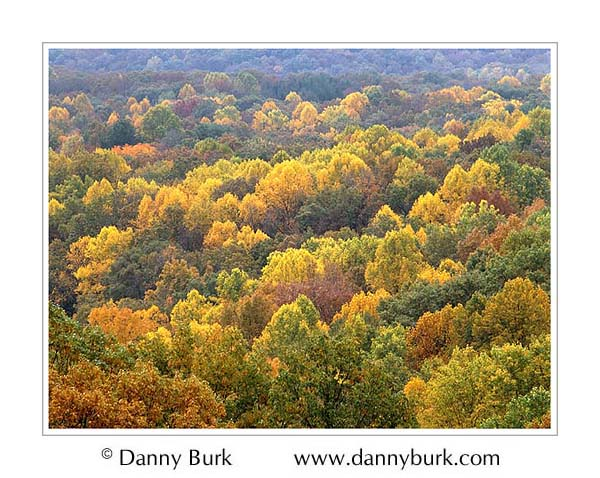 Picture: Autumn color in Brown County State Park, Indiana