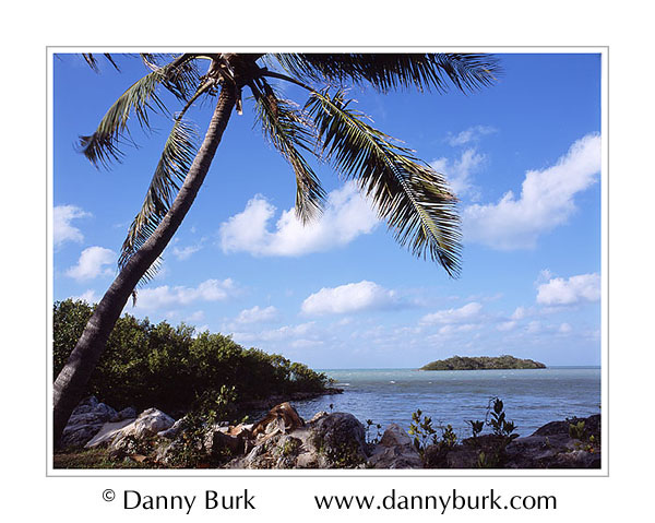Picture: Coconut palm and offshore island, Crane Point Hammock, Vaca Key, Florida