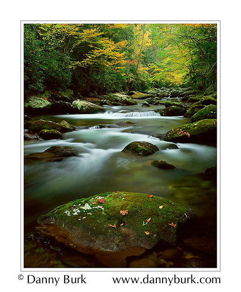 Picture: Jake's Creek, Elkmont, Great Smoky Mountains National Park