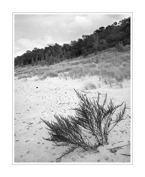 Picture: Dunes, Grand Mere State Park, Michigan