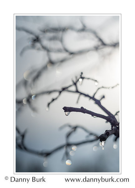 Icy Crabapple twigs, South Bend, Indiana