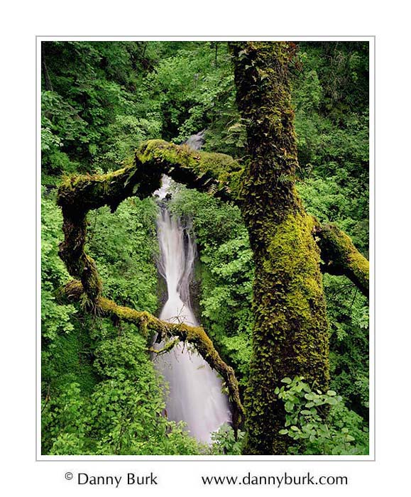Picture: Sheppards Dell Falls, Columbia River Gorge, Oregon