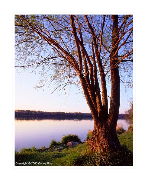 Picture: Tree at Sunset, Worster Lake, Potato Creek State Park, Indiana