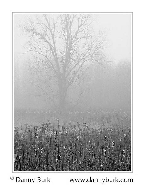 Picture: Tree in fog, Potato Creek State Park, Indiana