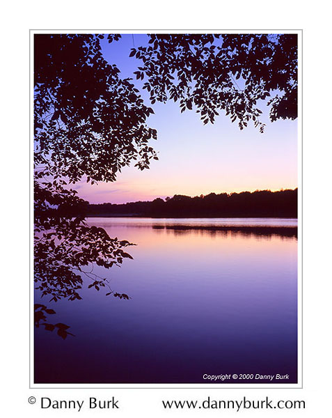 Picture: Silhouetted Trees, Dusk, Worster Lake, Potato Creek State Park, Indiana