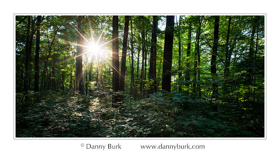 Picture: Sunstar among the trees, Potato Creek State Park, Indiana