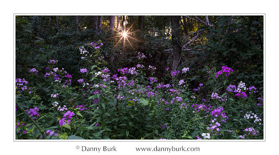 Picture: Phlox with sunstar, Potato Creek State Park, Indiana