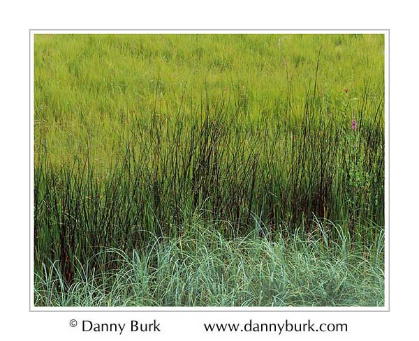Picture: Grasses, Sleeping Bear Dunes National Lakeshore, Michigan