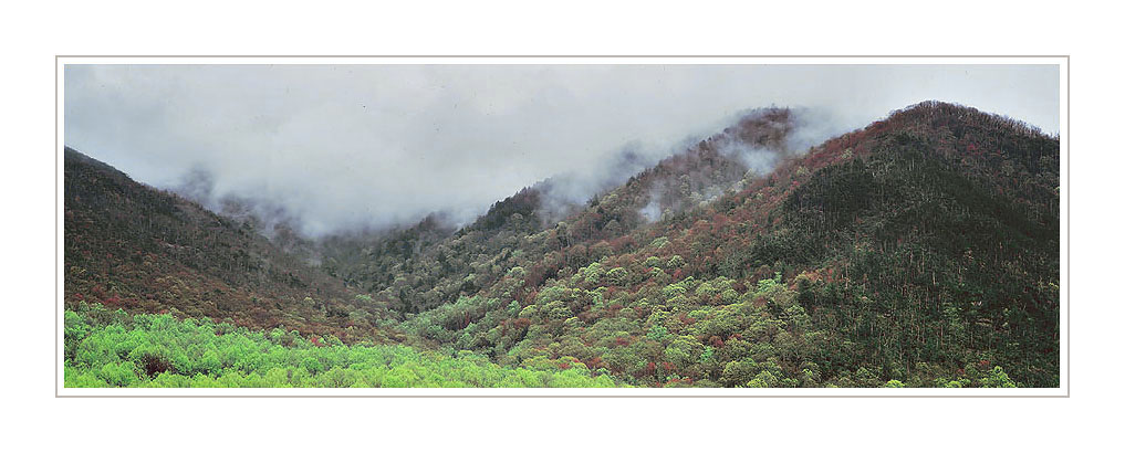 Picture: Fog-covered hills after rainstorm, Great Smoky Mountains National Park, Tennessee - Panorama