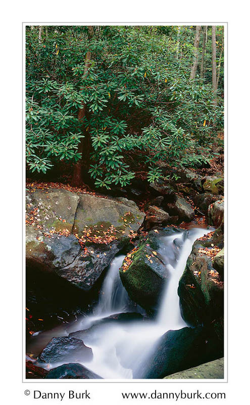 Picture: Rhododendron and waterfall panorama, Tremont, Great Smoky Mountains National Park, Tennessee - Panorama