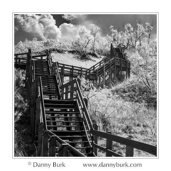 Infrared: Stairs on trail, West Beach, Indiana Dunes National Lakeshore